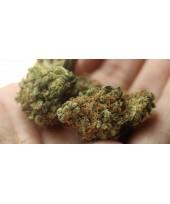 CBD: el componente del cannabis sin efectos psicoactivos
